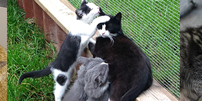 Mange killinger og katte på vore internater